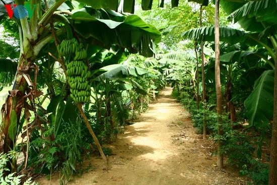 Vườn nhà, Huế