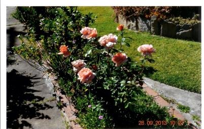 30-8-2011 QUẾ IN THE GARDEN 014