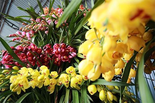 hoa lan 10