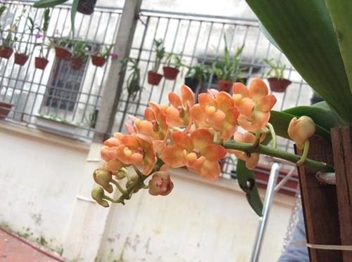 hoa lan 16
