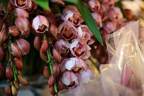 hoa lan 2