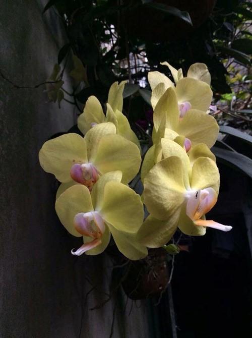 hoa lan 21.jpg
