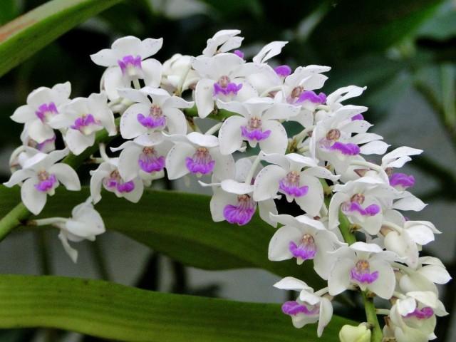 hoa lan 25