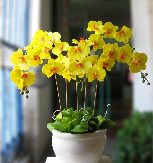 hoa lan 29.jpg