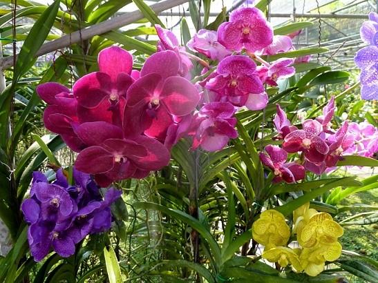 hoa lan 33.jpg