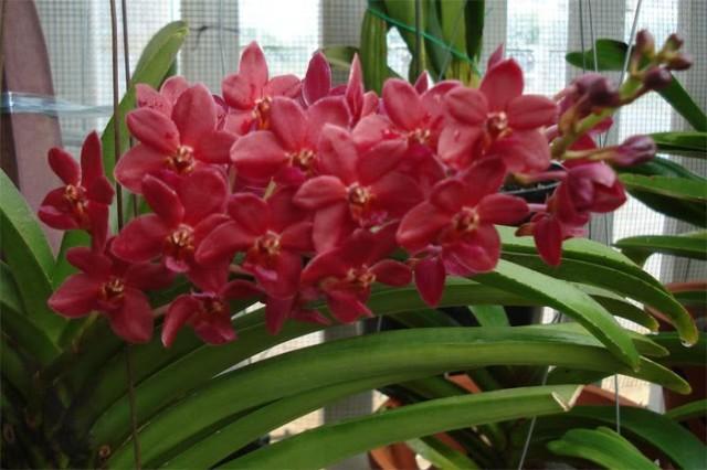 hoa lan 34