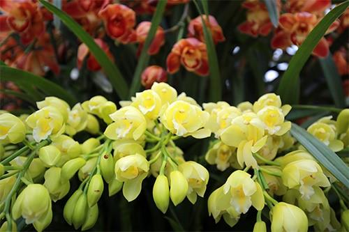 hoa lan 4