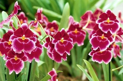 hoa lan 6