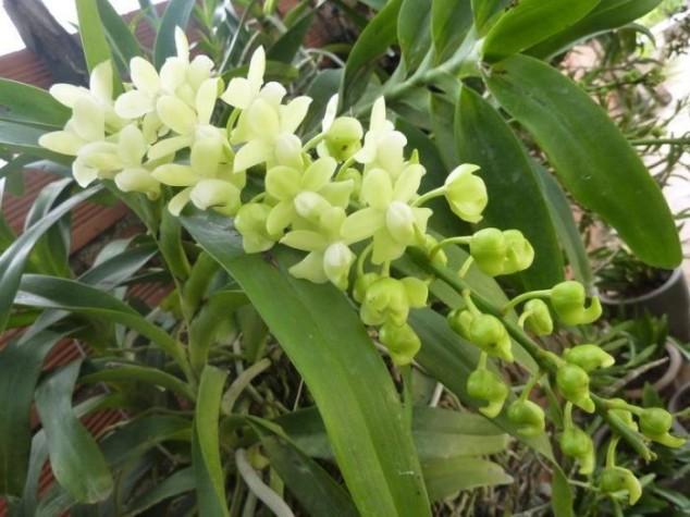 hoa lan 8.jpg