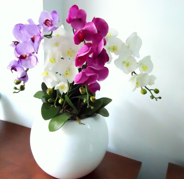 hoa lan.jpg