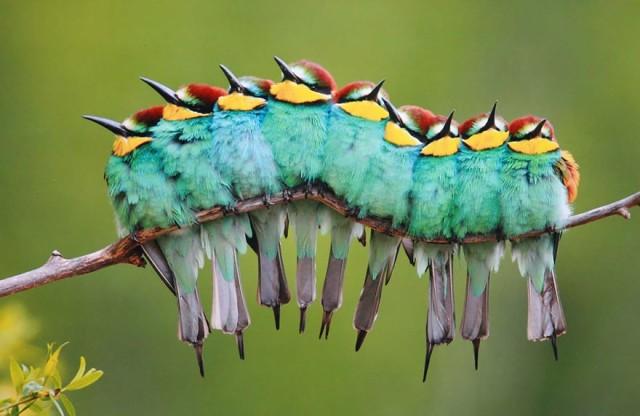 Những con chim sưởi ấm cho nhau